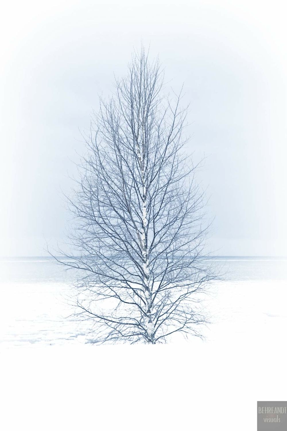 A birch tree stands along the cold shore of Lake Michigan